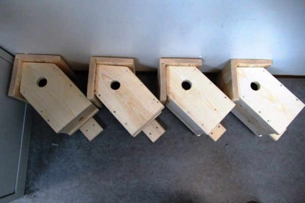 Vogelhuis 6